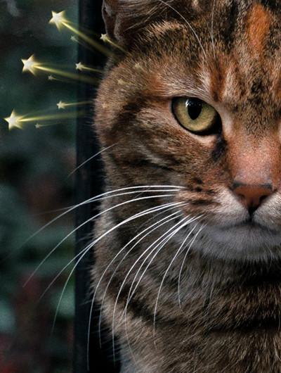 cat2005_副本.jpg